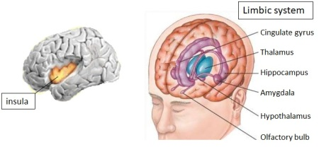 Insula and Limbic system